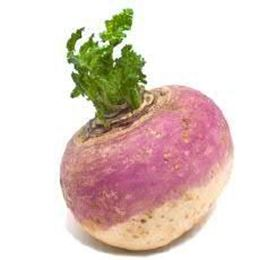 Picture of TURNIP EACH