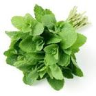 Picture of FRESH MINT